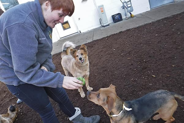 Staff member with dogs in the yard