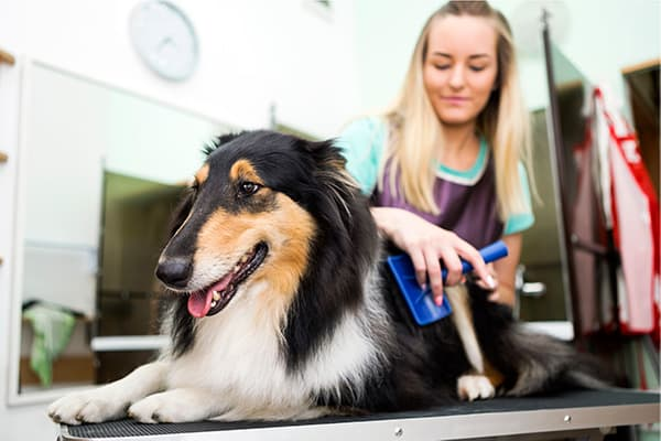 Long-haired dog getting brushed